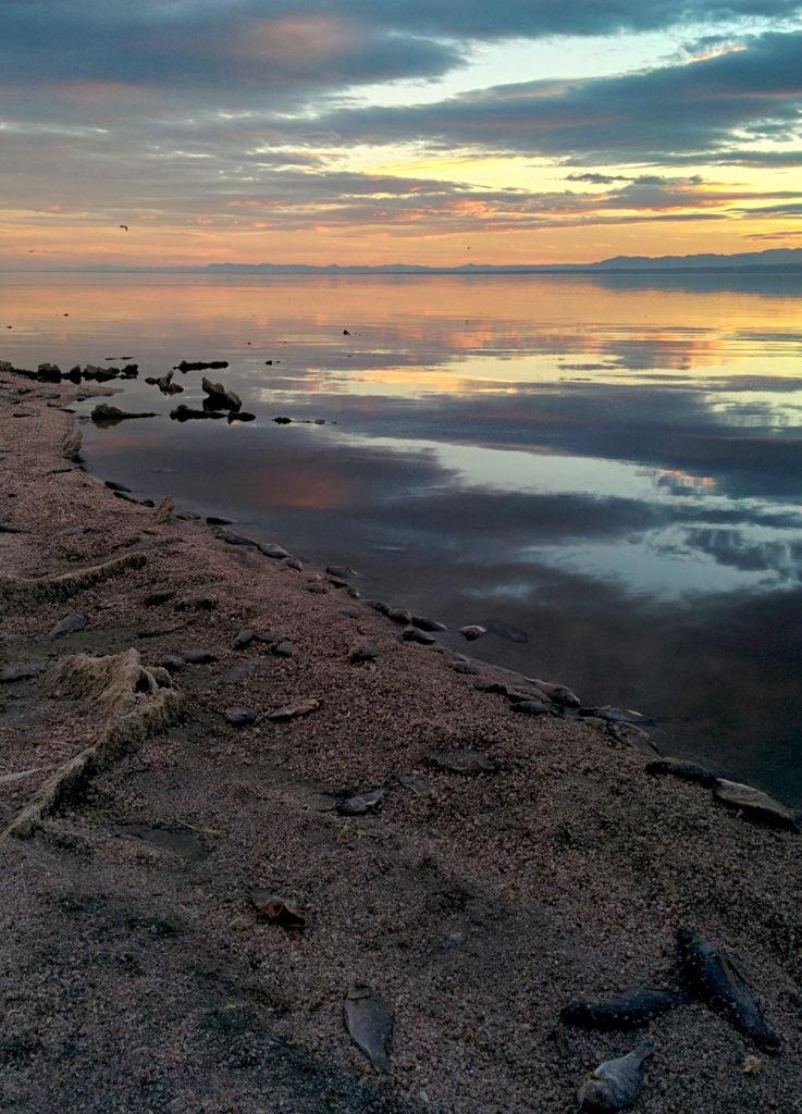 Nothing mundane week 30 the stinking salton sea for Salton sea fishing